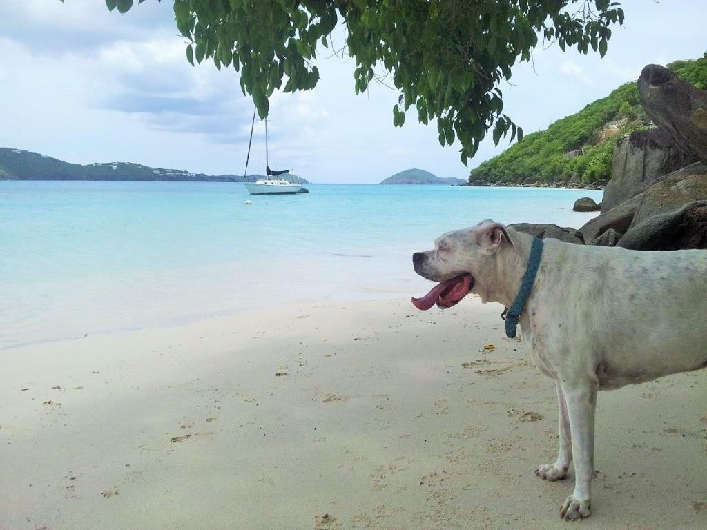 Dog on Platform Beach, USVI